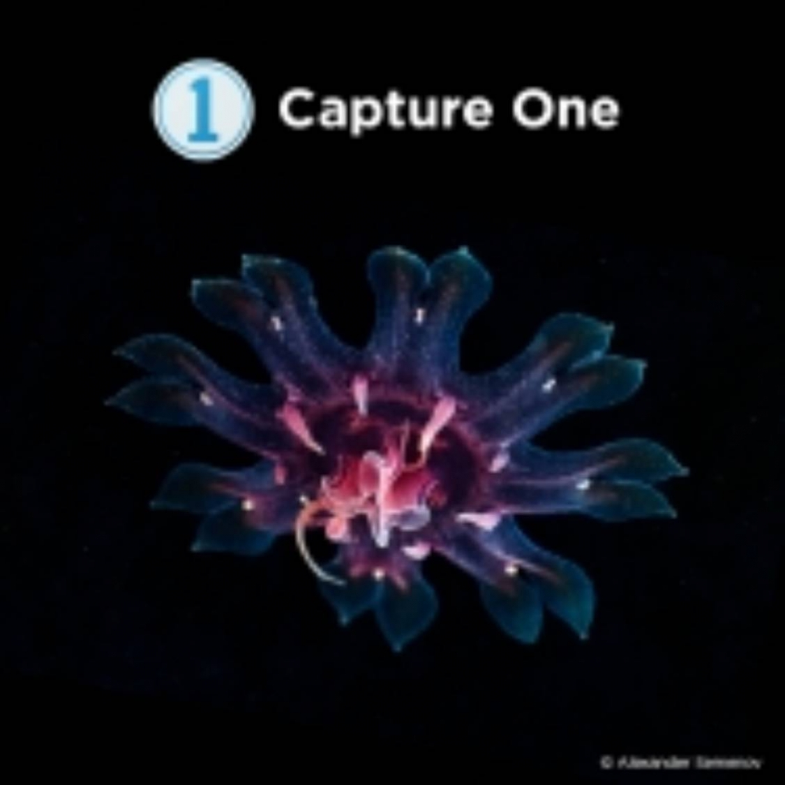 Capture One Pro 20 (Nikon)